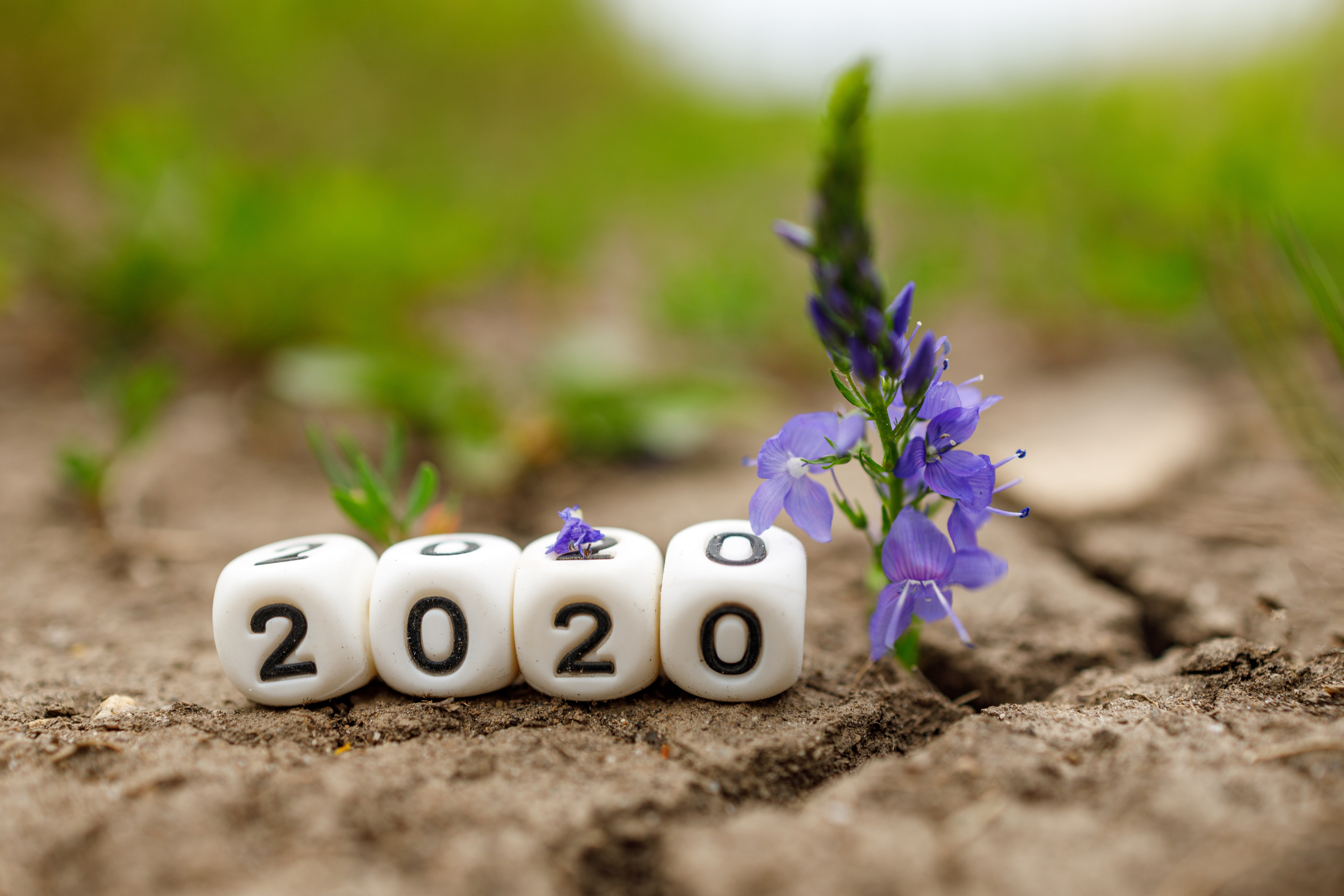 The Latest … in the membership world (2020 round-up)